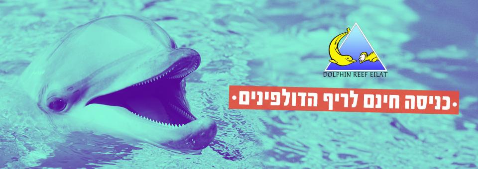 תמונת נושא עבור Jazz Time בריף הדולפינים